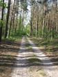 Лесной хайвей